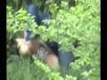Xem phim sex chơi nhau trong bụi cây